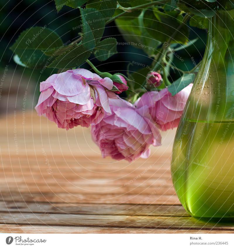 hangover Lifestyle Plant Spring Flower Rose Blossoming Hang Illuminate Esthetic Green Pink Spring fever Wooden table Garden Garden table Vase Bud Still Life