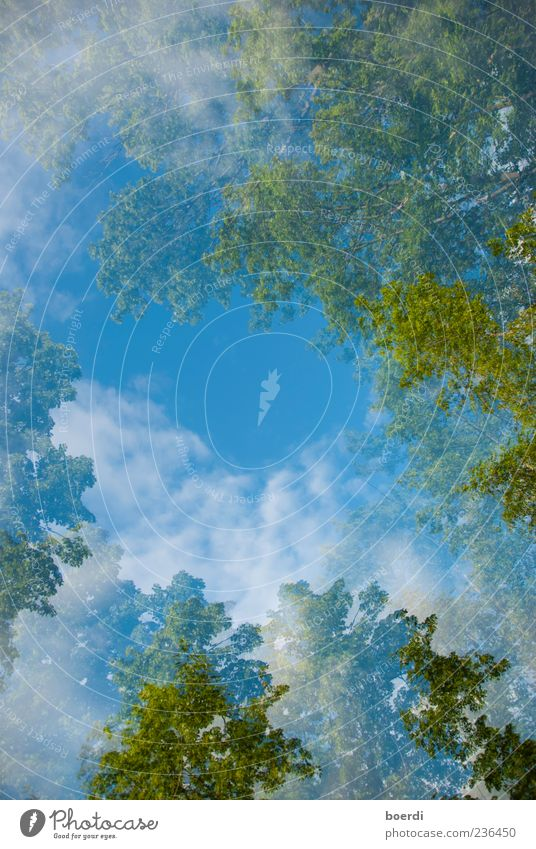 air Environment Nature Landscape Plant Sky Clouds Spring Summer Climate Beautiful weather Tree Infinity Blue Green Moody Double exposure Colour photo