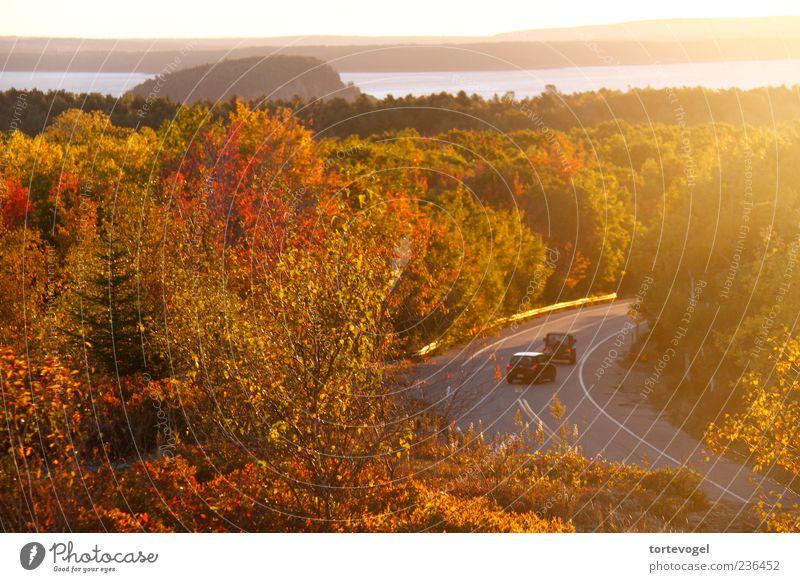 Indian Summer @ Acadia NP Relaxation Vacation & Travel Tourism Trip Far-off places Freedom Sun Ocean Nature Landscape Horizon Sunrise Sunset Sunlight Autumn