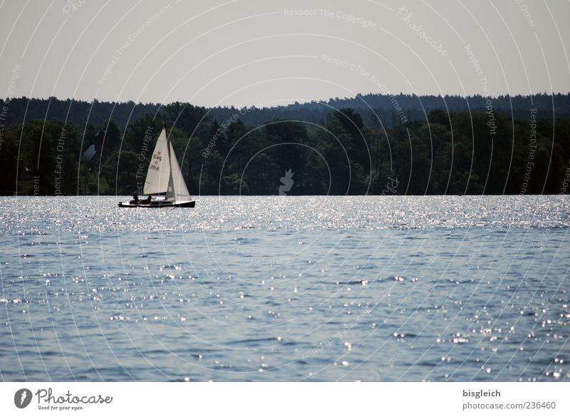 Skirmish Lake Swift I Sailing Sailboat Aquatics Waves Scharmützel Lake Blue Calm Water Colour photo Subdued colour Exterior shot Deserted Copy Space top