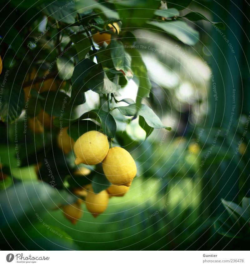 Nature White Tree Green Plant Leaf Black Nutrition Yellow Emotions Park Funny Food Fruit Fresh Joie de vivre (Vitality)