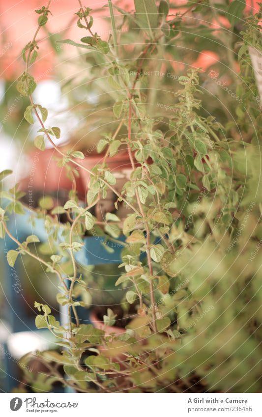 Nature Green Plant Natural Bushes