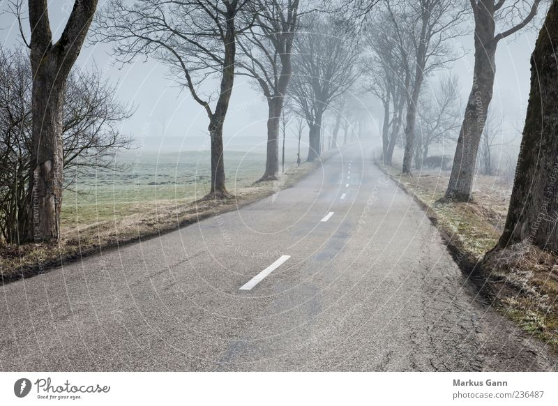 Street in the morning fog Nature Fog Avenue Tree Lanes & trails Weather Country road Colour photo Subdued colour Exterior shot Copy Space bottom Morning Dawn