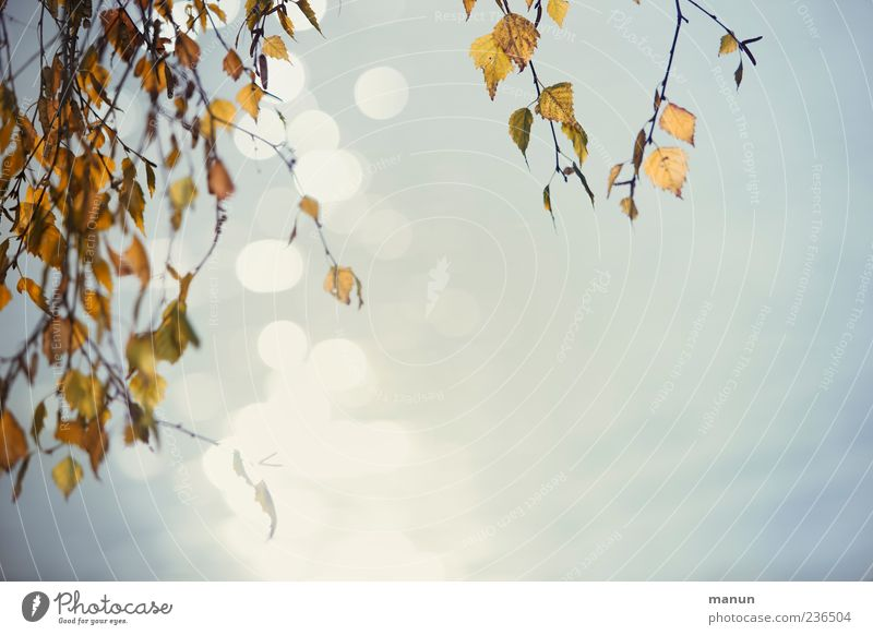 Nature Water Beautiful Tree Leaf Autumn Reflection Twigs and branches Exterior shot Water reflection Sagging
