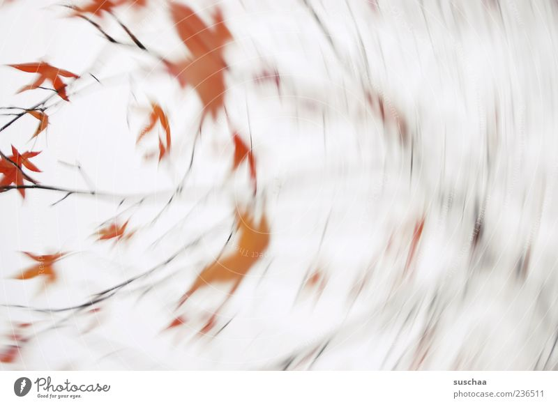 It's stormy outside. Environment Nature Plant Sky Autumn Wind Gale Tree Rotate Red Leaf Exterior shot Abstract Deserted Motion blur Blur Branch