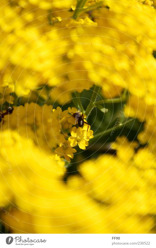 I would so like to be a bee... Nature Plant Animal Sunlight Flower Blossom Wild animal 1 Yellow Green Colour photo Exterior shot Close-up Deserted Day Contrast