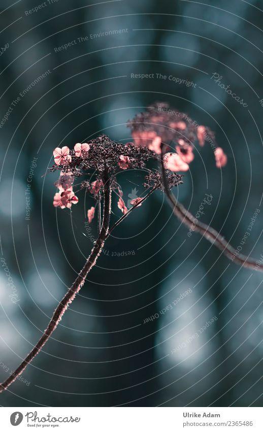 Faded Hydrangeas Design mourning card Funeral service Nature Plant Autumn Winter Flower Blossom Hydrangea blossom Garden Park Glittering Illuminate Sadness Dark