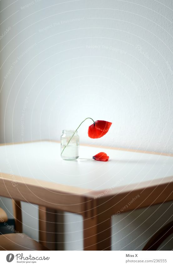 Red Flower Loneliness Blossom Sadness Room Table Decoration Grief Transience End Blossoming Poppy Fragrance Limp Vase