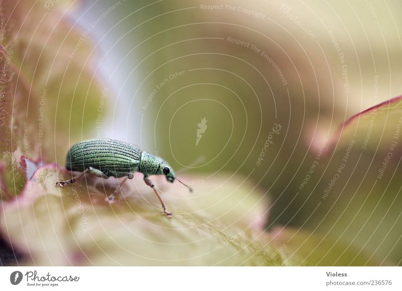 Nature Green Leaf Animal Near Beetle Weevil