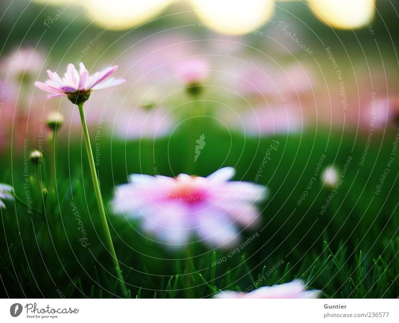 White Flower Green Plant Summer Joy Leaf Black Yellow Meadow Blossom Grass Spring Park Pink Environment