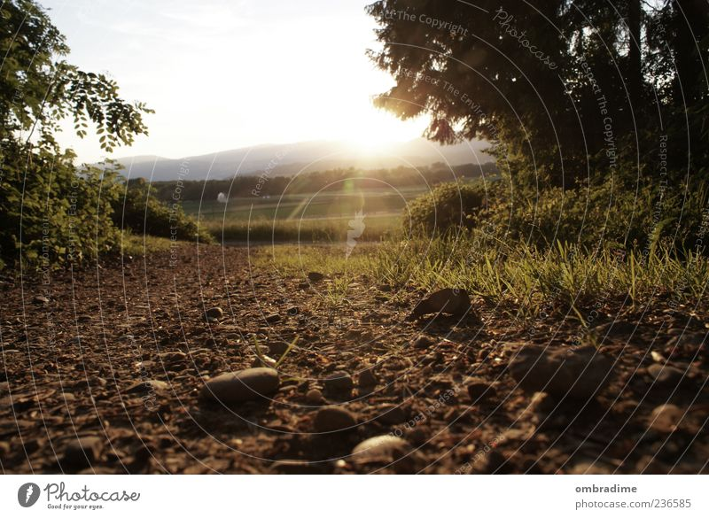 This road is going to be rocky.... Environment Nature Landscape Elements Earth Summer Beautiful weather Meadow Field Forest Moody Sunset Colour photo