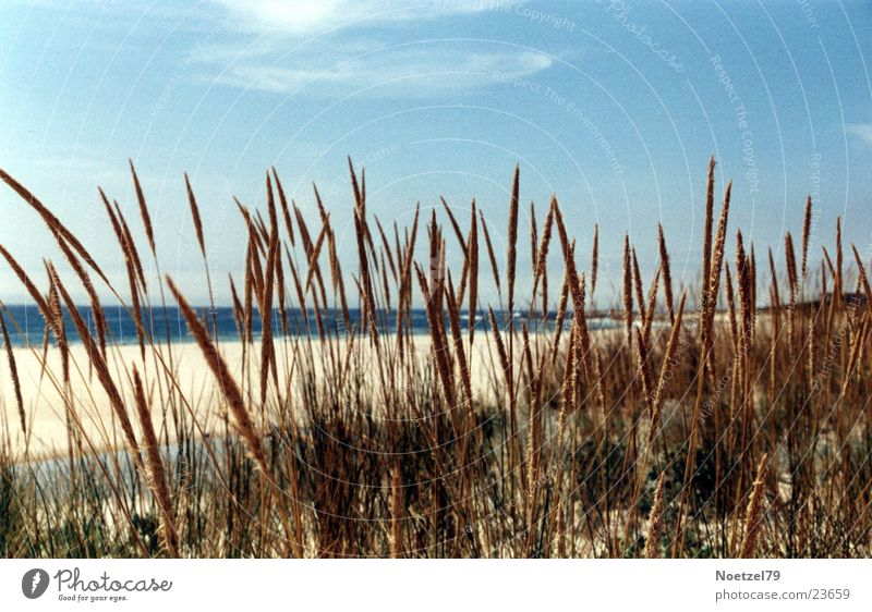 Sky Sun Ocean Beach Grass Atlantic Ocean