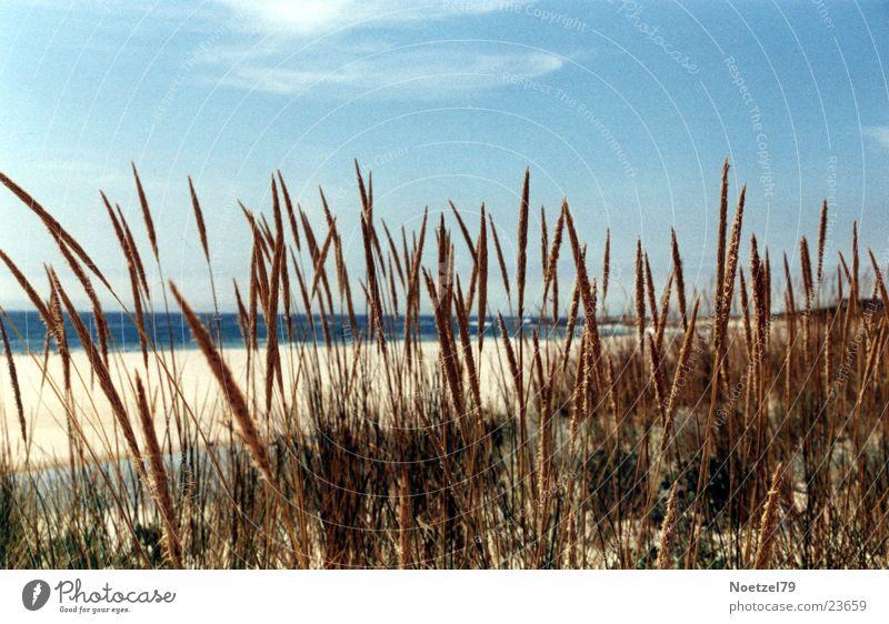 Sky Sun Ocean Beach Grass Atlantic Ocean