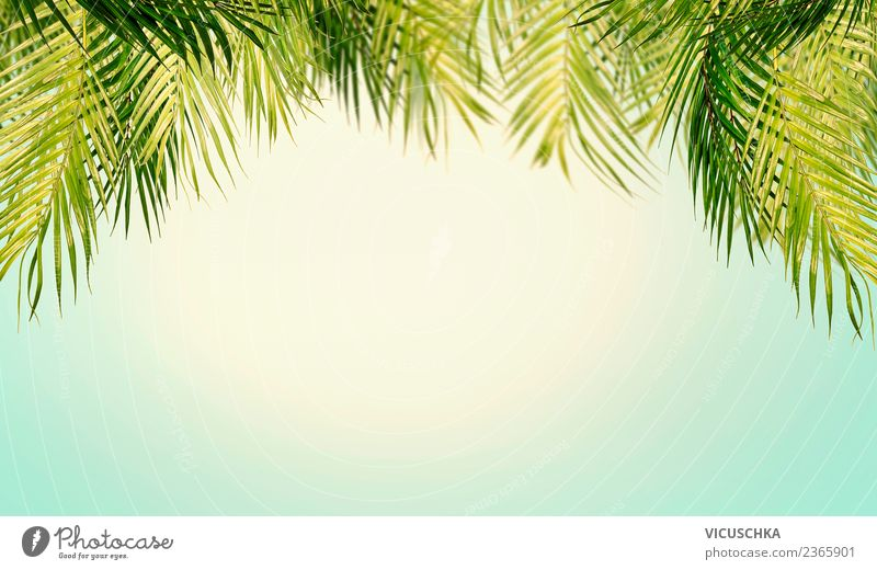Tropical palm leaves with sky background Style Design Relaxation Vacation & Travel Summer Beach Ocean Nature Landscape Plant Sky Sunlight Beautiful weather Leaf