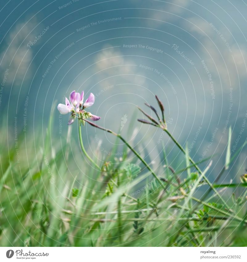 bluish green Nature Plant Cloudless sky Flower Grass Leaf Blossom Garden Park Meadow Blossoming Illuminate Faded Blue Green Pink Multicoloured Exterior shot