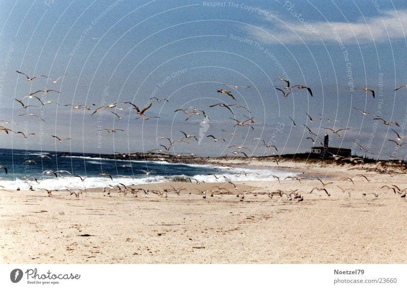 startled seagulls Beach Ocean Seagull Atlantic Ocean Sun Sand