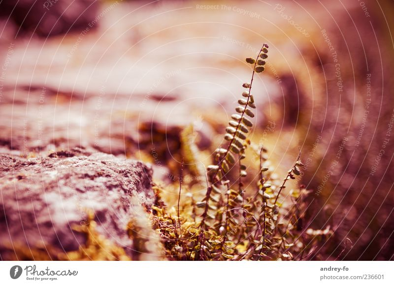 plant Nature Summer Plant Stone To dry up Brown Growth Red Leaf Thin Hot Colour photo Subdued colour Exterior shot Copy Space left Contrast Deep depth of field