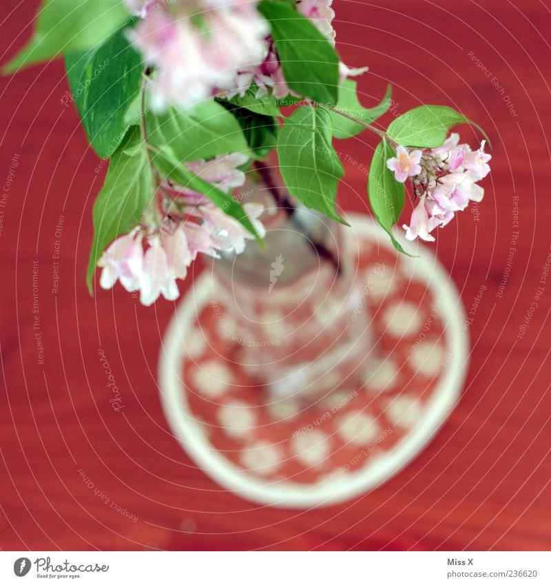 Top Decoration Flower Leaf Blossom Blossoming Fragrance Pink Red Vase Spring flower Flower vase Table decoration Twigs and branches Colour photo Multicoloured