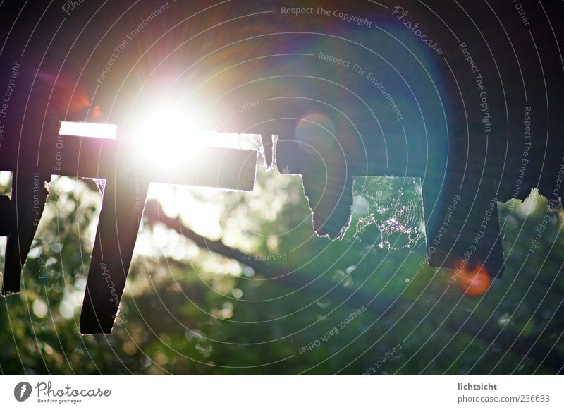 Into the light Nature Climate Beautiful weather Gate Decline Shed Wooden board Spider's web Refraction Shaft of light Apocalyptic sentiment Lens flare Roof