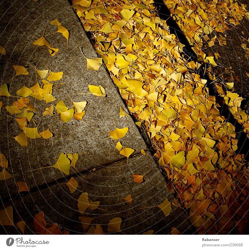 autumn leaves Nature Autumn Wind Tree Leaf Foliage plant Old town Park Cold Yellow Ground Sidewalk Concrete Street Autumnal Autumn leaves Autumnal colours