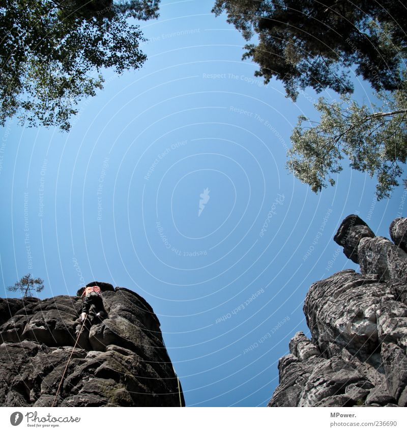 scramble up Masculine 1 Human being Movement Blue Tree Treetop Sky Climbing Rock Saxon Switzerland Rope Above Tall Upward Safety (feeling of) Contrast Branch