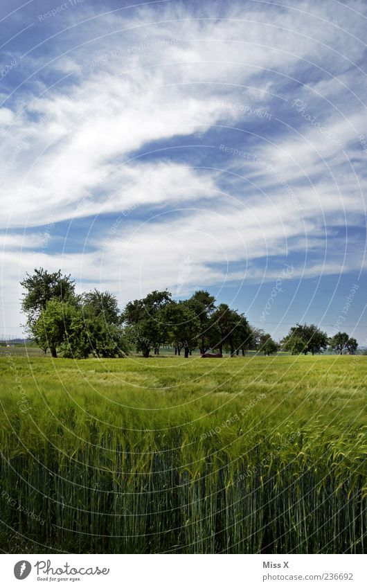 Sky Nature Blue Green Tree Summer Clouds Environment Landscape Field Beautiful weather Agriculture Blue sky Rural Wheatfield