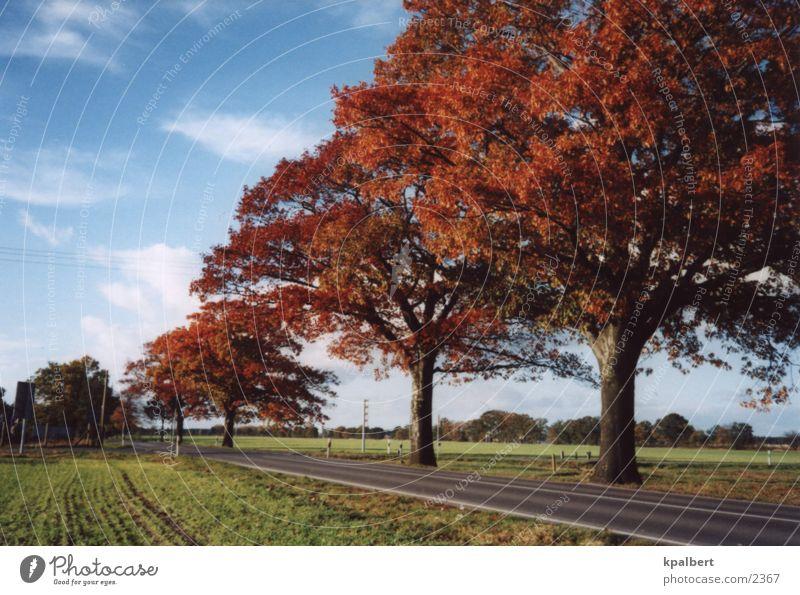 Street in autumn Autumn Avenue red oaks