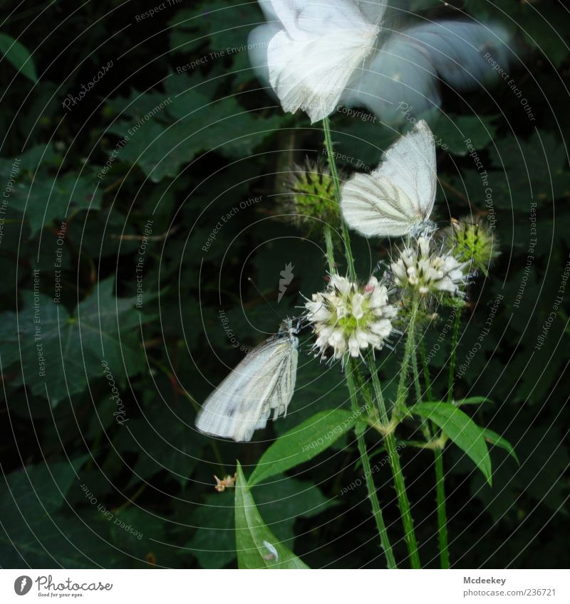 Nature White Green Plant Summer Flower Animal Black Yellow Flying Sit Natural Elegant Free Growth Group of animals