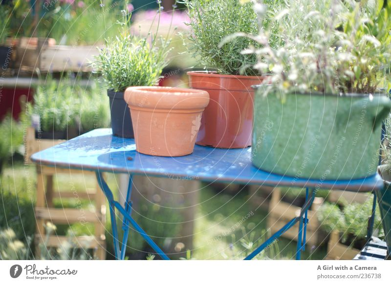 Nature Plant Summer Garden Style Natural Design Table Growth Lifestyle Herbs and spices Fragrance Markets Flowerpot Arrange Presentation