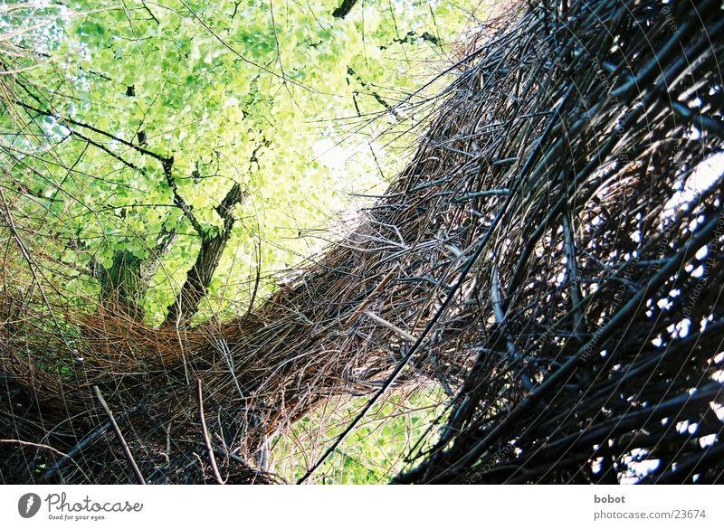 Nature Green Leaf Wood Brown Vantage point Branch Twig Exhibition Wicker mesh