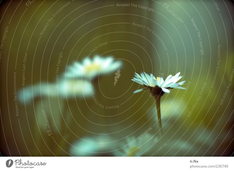 Nature Blue White Beautiful Plant Flower Leaf Yellow Environment Landscape Meadow Spring Small Blossom Bright Growth