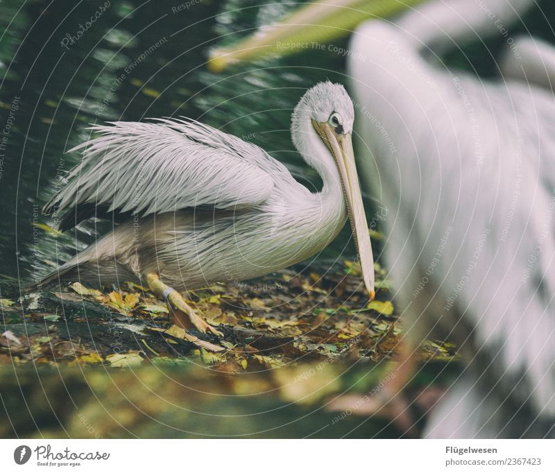 Nature Vacation & Travel Landscape Animal Environment Tourism Bird Trip Wild animal Feather Adventure Walking Wing Climate Pet Zoo