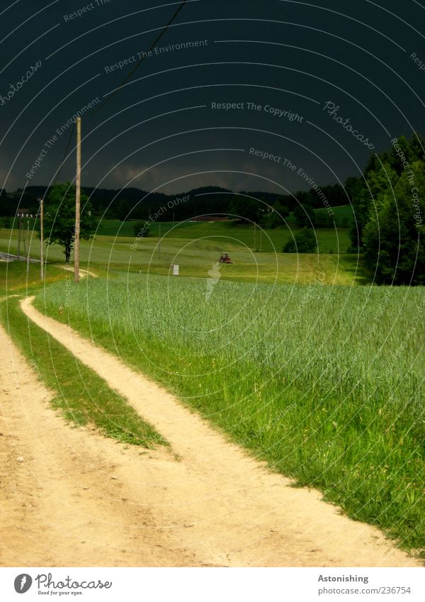 Sky Nature Green Tree Plant Summer Clouds Forest Environment Landscape Street Meadow Lanes & trails Gray Grass Sand