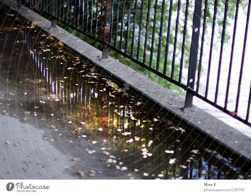 Water Leaf Lanes & trails Dirty Wet Bridge Sidewalk Fence Bridge railing Autumn leaves Puddle Reflection Water reflection