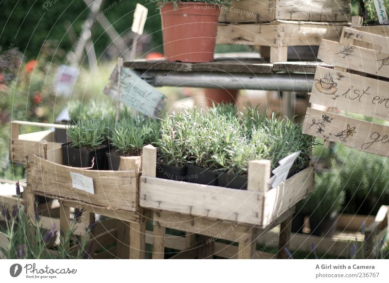 Bringing Provence home Plant Summer Agricultural crop Pot plant Lavender Crate Market stall Flowerpot Signs and labeling Exterior shot Shallow depth of field