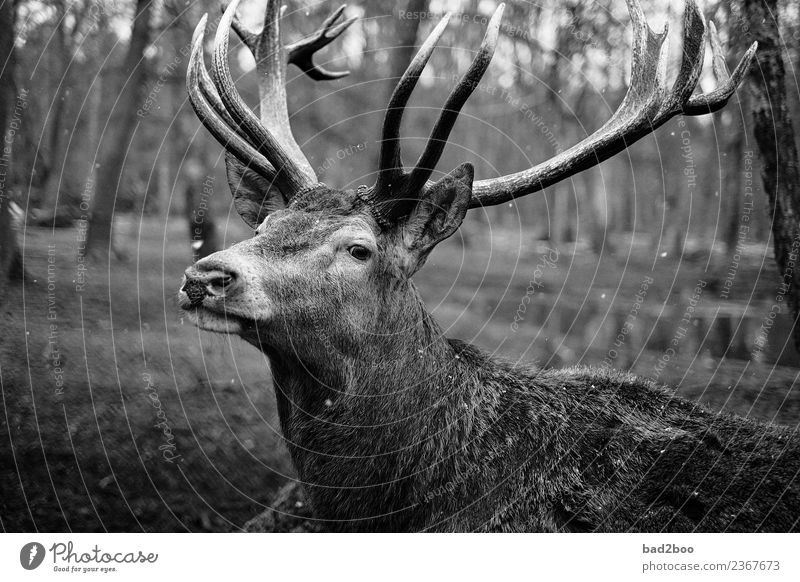 deer Animal Farm animal Wild animal Animal face Pelt Zoo stag 1 Observe Discover Relaxation Looking Stand Hiking Wait Esthetic Exceptional Authentic Simple