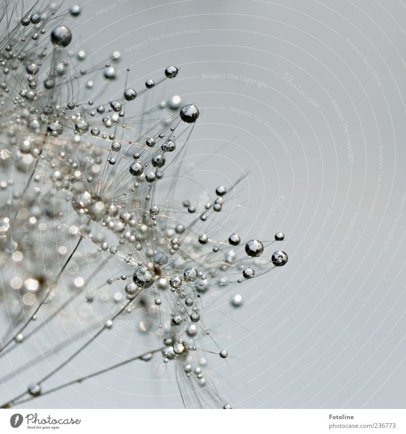 Silver Breeze was here! ;-) Environment Nature Plant Elements Water Drops of water Sky Cloudless sky Bright Wet Colour photo Exterior shot Close-up