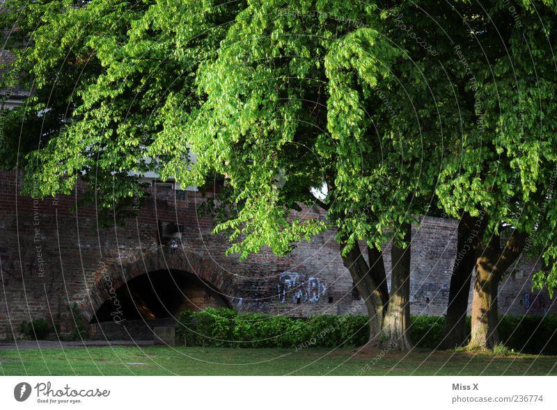 in the park Nature Summer Tree Grass Park Meadow Bridge Green Ulm Colour photo Exterior shot Deserted Dawn Evening Twilight Shadow