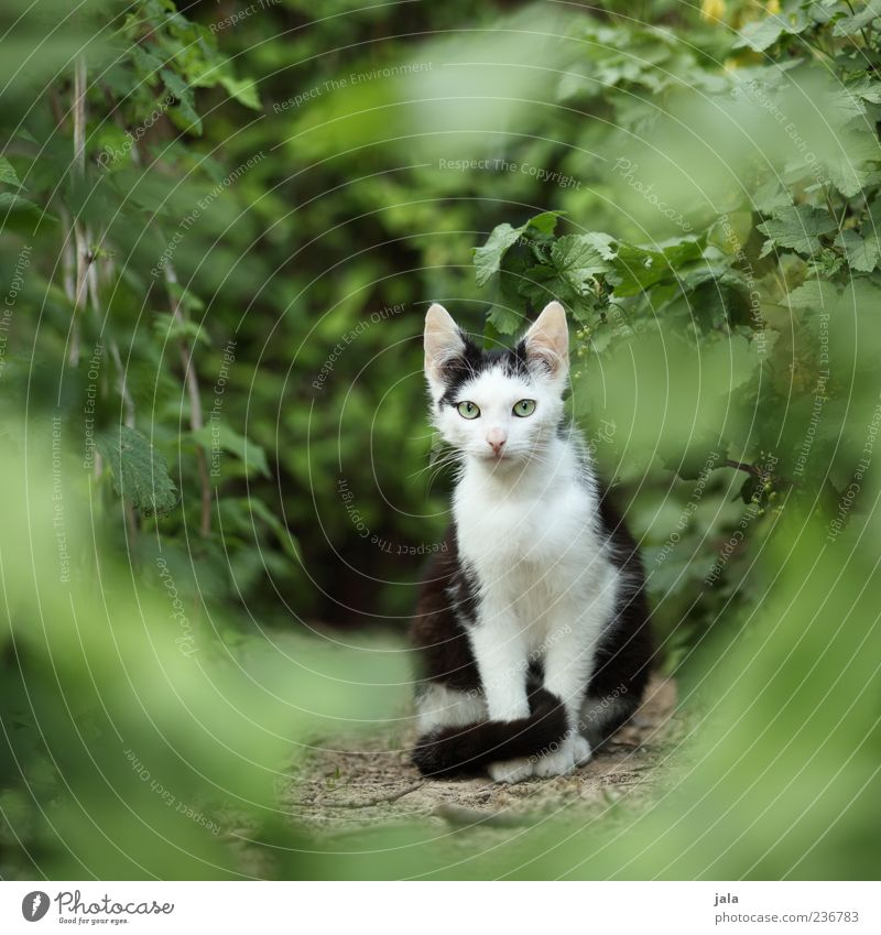 Cat Nature Plant Animal Garden Baby animal Sit Bushes Cute Observe Curiosity Pet Timidity Foliage plant Free-living Prowl