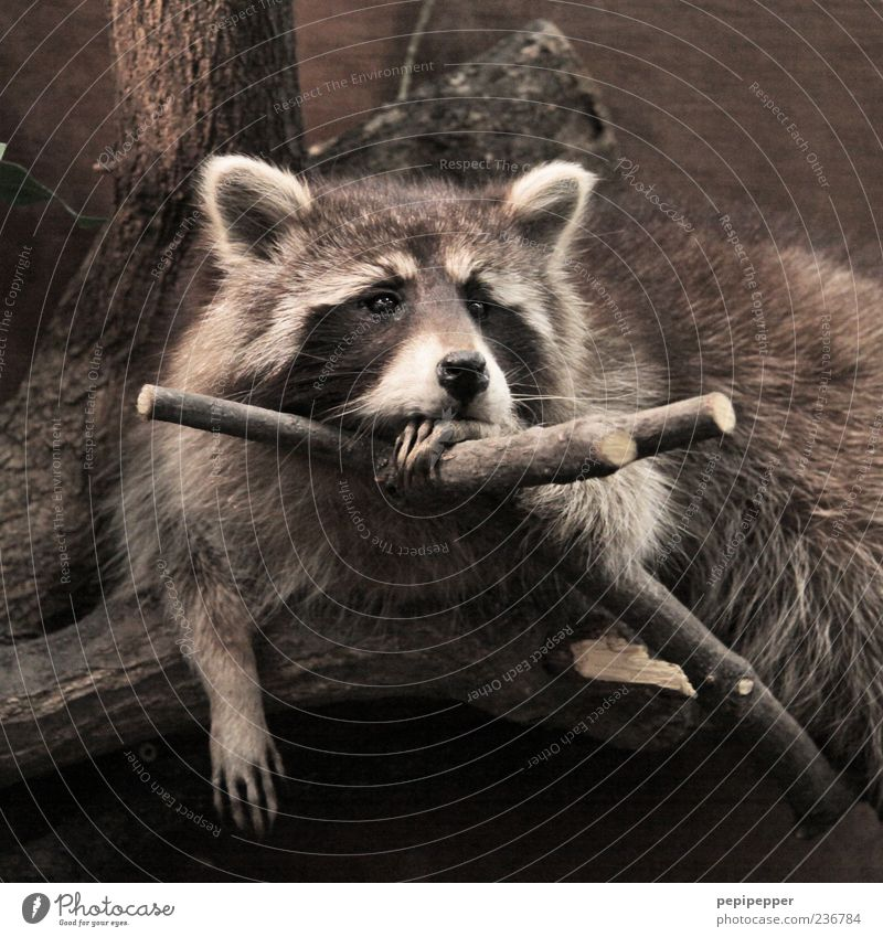 Nature Tree Animal Loneliness Calm Relaxation Sadness Dream Moody Brown Wild animal Observe Pelt Animal face Zoo Serene