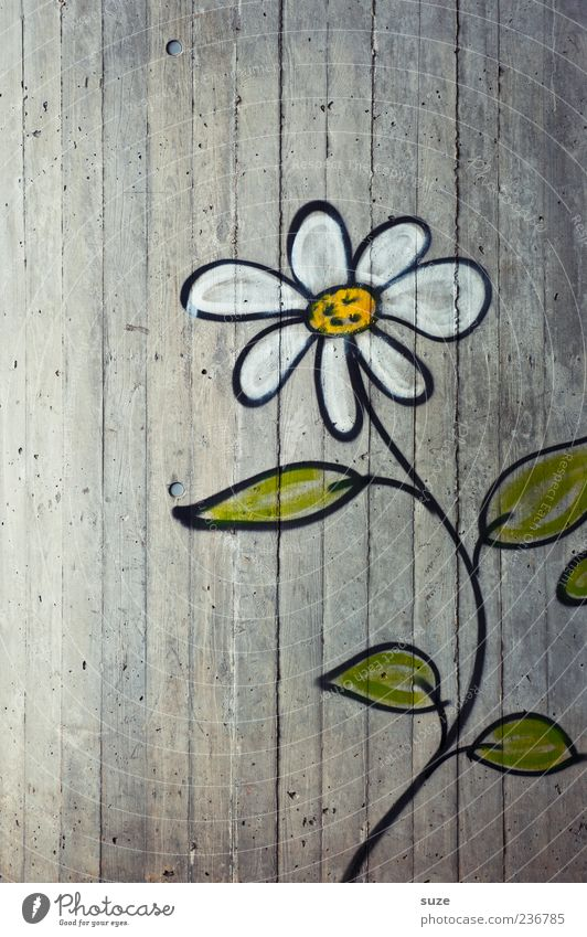 Beautiful Flower Environment Graffiti Wall (building) Wall (barrier) Gray Art Facade Authentic Growth Decoration Happiness Concrete Cute Friendliness