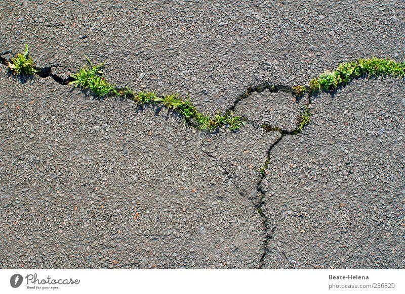 Old Green Plant Street Spring Grass Gray Power Beginning Growth Force Might Asphalt Pavement Crack & Rip & Tear Destruction