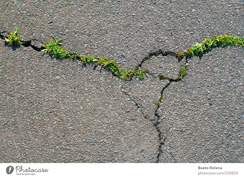 Old Green Plant Street Spring Grass Gray Power Beginning Growth Force Might Asphalt Pavement Crack & Rip & Tear Destruction