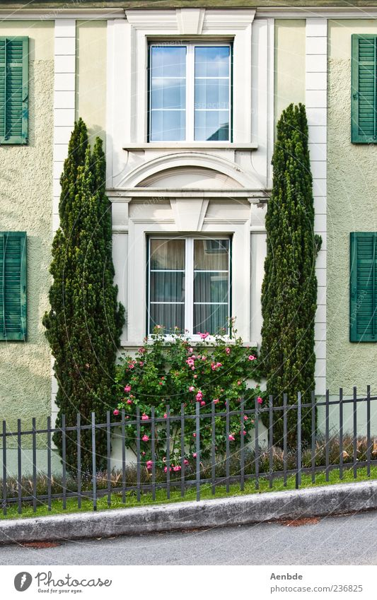Cypresses in front of the house House (Residential Structure) Dream house Wall (barrier) Wall (building) Facade Window Esthetic Elegant Green Shutter