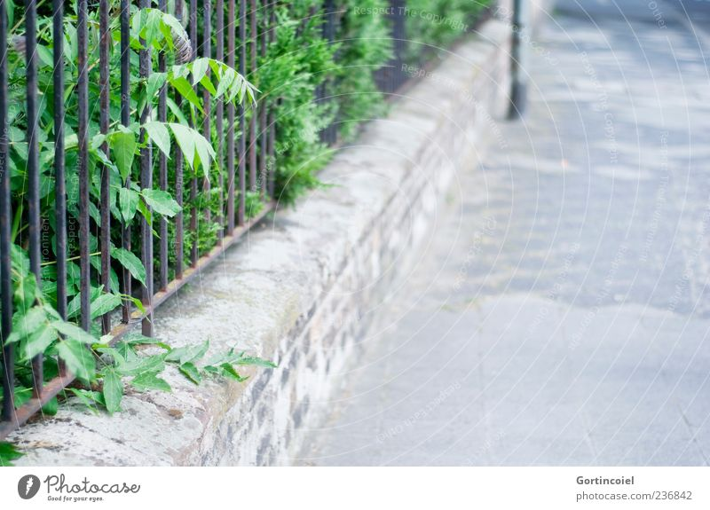 stroll Nature Plant Bushes Foliage plant Garden Street Lanes & trails Wall (barrier) Wall plant Front garden Sidewalk Building line Deserted Fence Colour photo