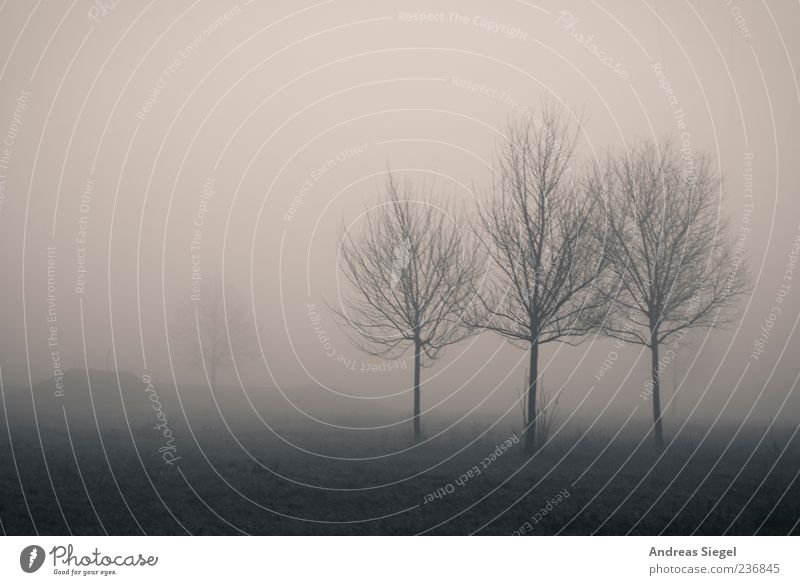 Nature Tree Environment Landscape Dark Meadow Air Field Fog Gloomy Transience Creepy Bad weather Black & white photo