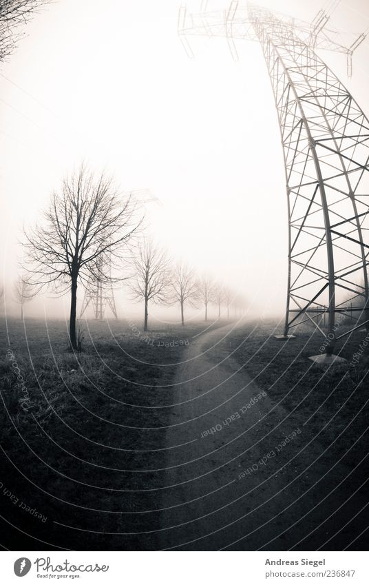 The way Technology Energy industry High voltage power line Electricity pylon Environment Nature Landscape Bad weather Fog Tree Meadow Field Lanes & trails