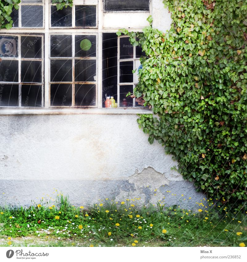 old factory Plant Ivy House (Residential Structure) Factory Window Old Courtyard Tendril Colour photo Exterior shot Deserted Copy Space bottom Building Open