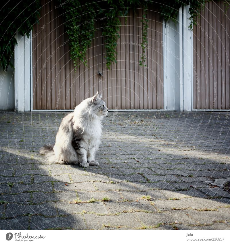 Cat Beautiful Plant Animal Pelt Watchfulness Cobblestones Pet Garage Courtyard Foliage plant Highway ramp (entrance) Free-living Prowl Street cat