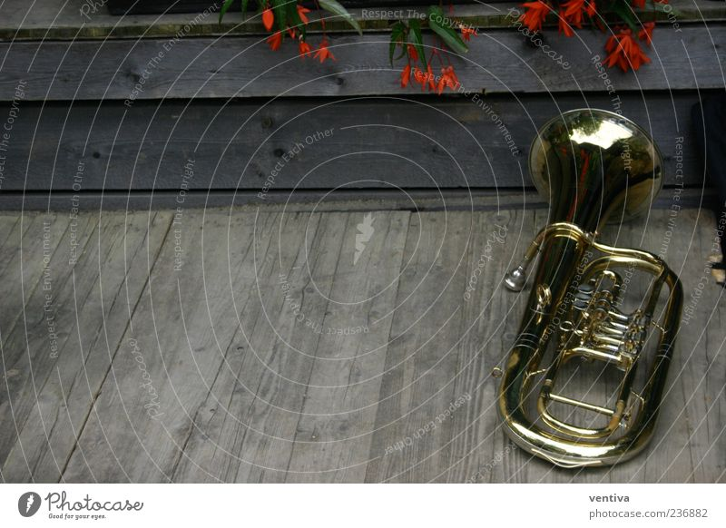 Plant Flower Wood Metal Music Gold Kitsch Musical instrument Wooden floor Remote Odds and ends Wind instrument Tuba